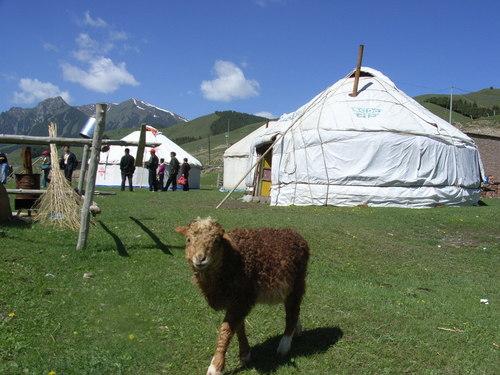羊(ヤン).JPG